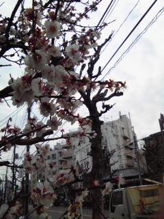 2011.3.23 近況_d0027507_14374931.jpg