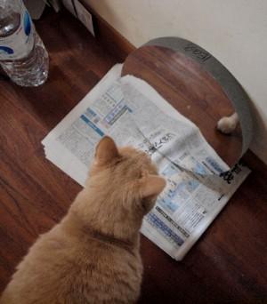 ネコと放物面鏡_a0095470_23492098.jpg