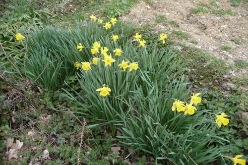 今年も畑を頑張るぞ~3月の畑_f0106597_21425747.jpg