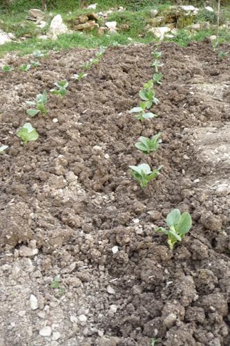 今年も畑を頑張るぞ~3月の畑_f0106597_21434930.jpg