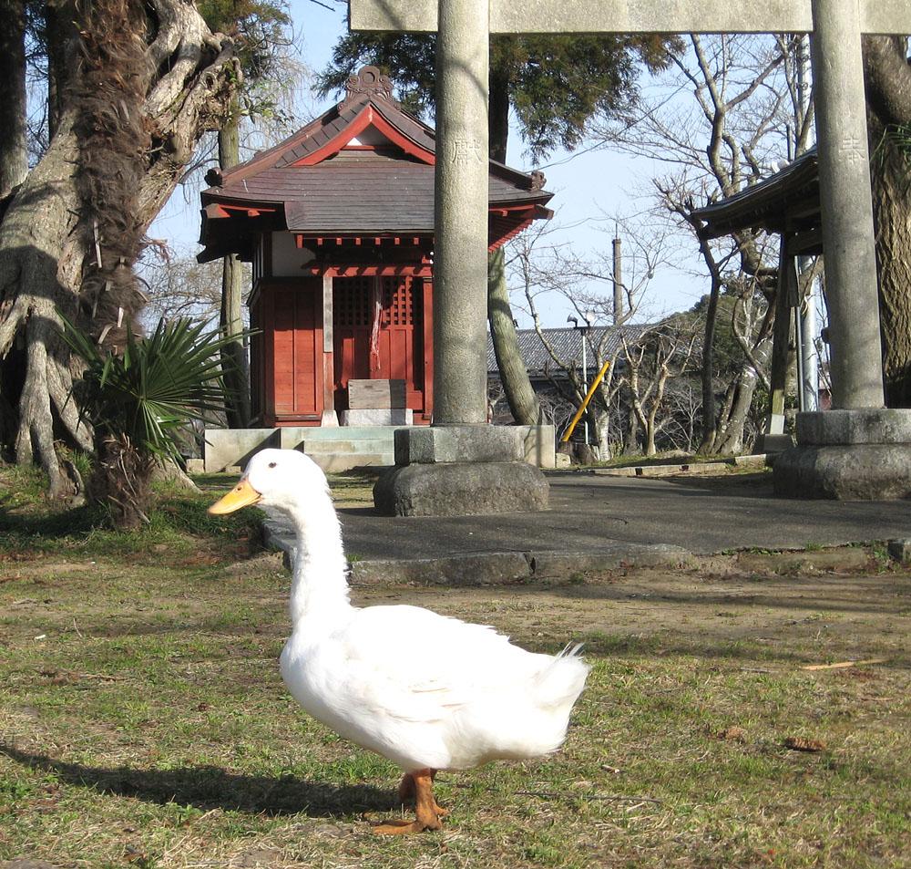 東日本大震災の義援金_b0114798_1654731.jpg
