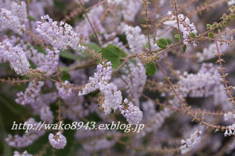 c0187403_1437360.jpg