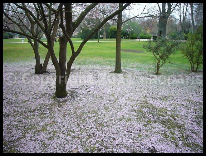 【街角の公園】リュクサンブルグ公園Jardin du Luxembourg3月19日(PARIS)_a0008105_2213567.jpg
