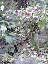 わたくし事ですが、我が家の春を紹介します。_f0129627_92697.jpg