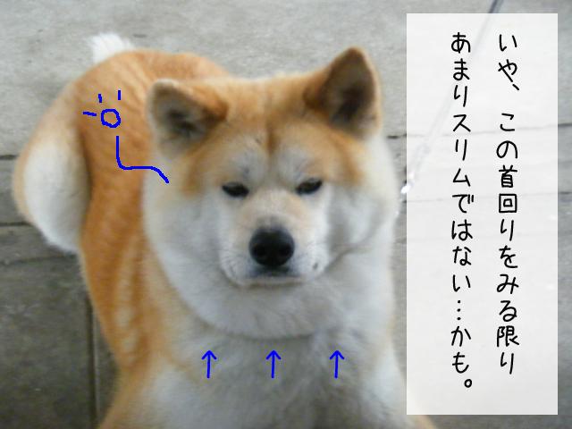 f0008935_15115844.jpg