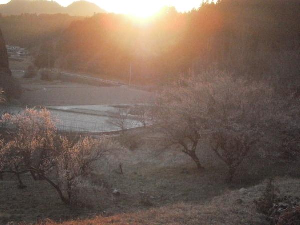 梅の花に降り注ぐ陽光_a0174458_22562062.jpg