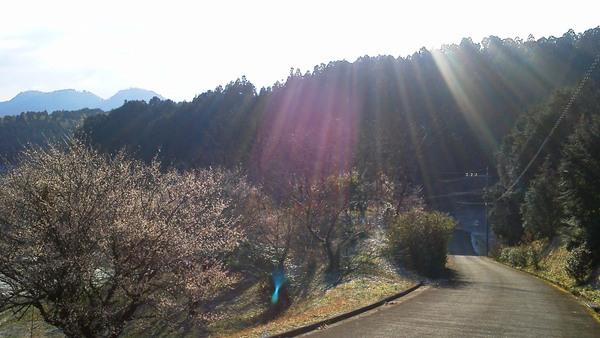 梅の花に降り注ぐ陽光_a0174458_2259729.jpg