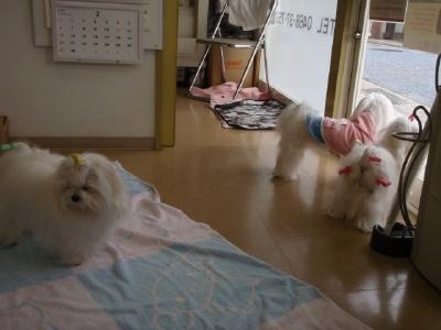 カミュウ動物病院からのお知らせとちょっぴり5マル_b0001465_18304943.jpg