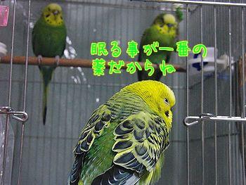 f0196665_233643.jpg