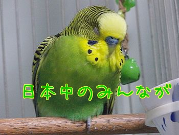 f0196665_23374564.jpg