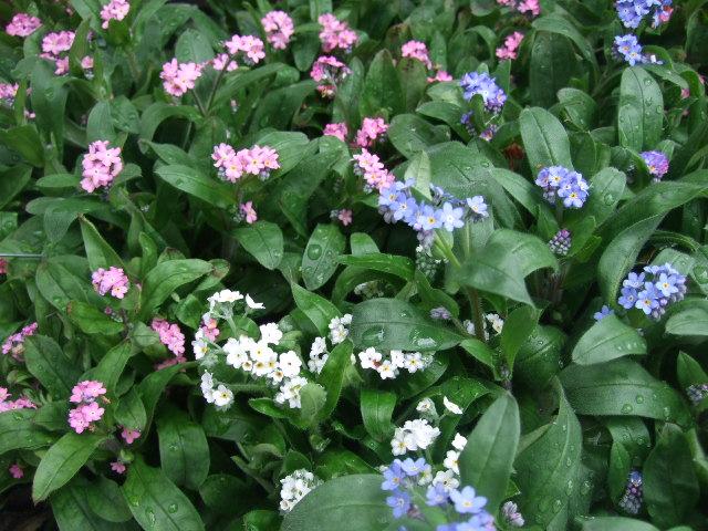 オークリーフ(ジョンクは春の香り)_f0049672_10581410.jpg