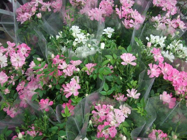 オークリーフ(ジョンクは春の香り)_f0049672_10582167.jpg