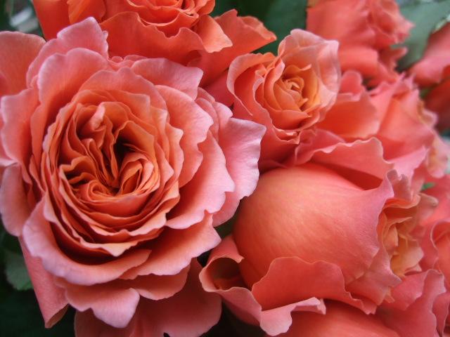 オークリーフ(ジョンクは春の香り)_f0049672_1182453.jpg
