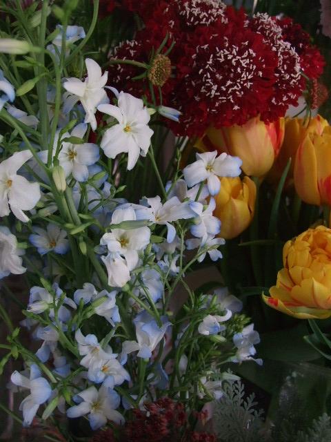 オークリーフ(ジョンクは春の香り)_f0049672_1184160.jpg