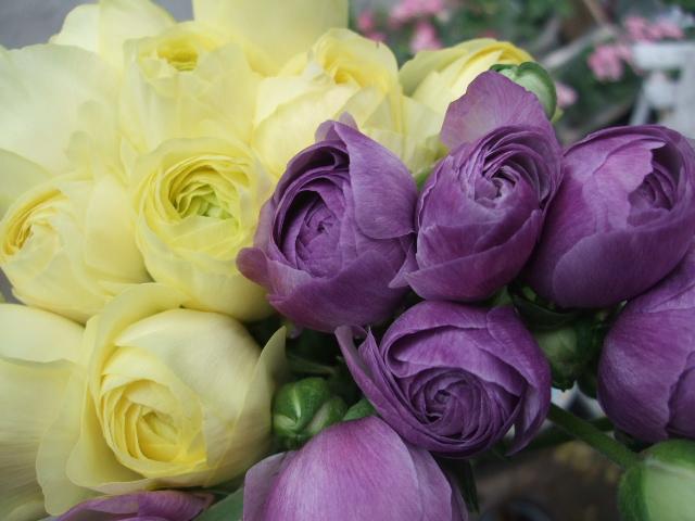 オークリーフ(ジョンクは春の香り)_f0049672_1184874.jpg
