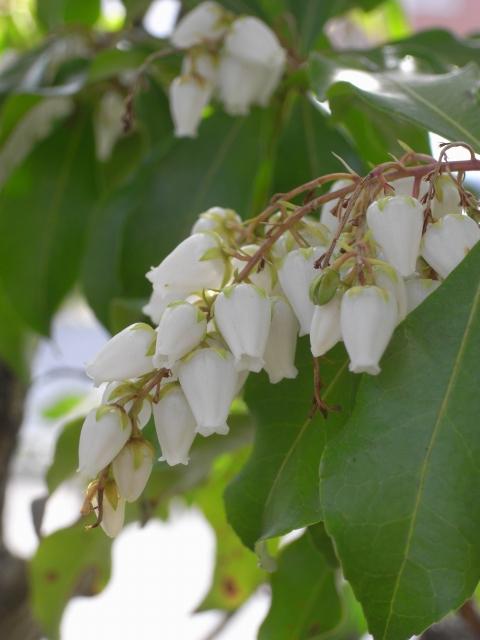 春のお花~家のお花(其の四)_e0152493_20353979.jpg