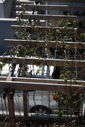 3月の庭…_c0124100_005381.jpg