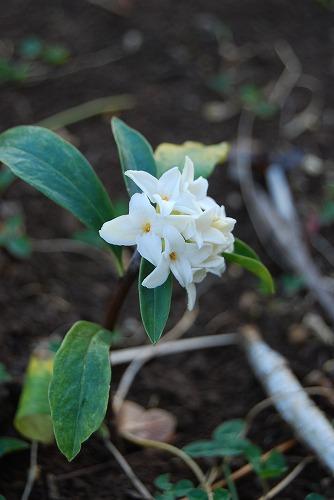 3月の庭…_c0124100_02085.jpg