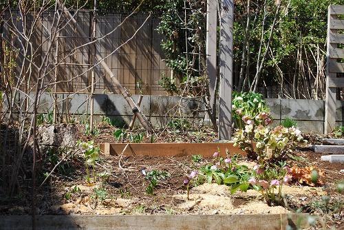3月の庭…_c0124100_023576.jpg