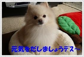 b0167519_9523283.jpg