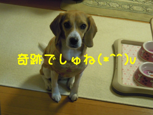c0166622_1042437.jpg