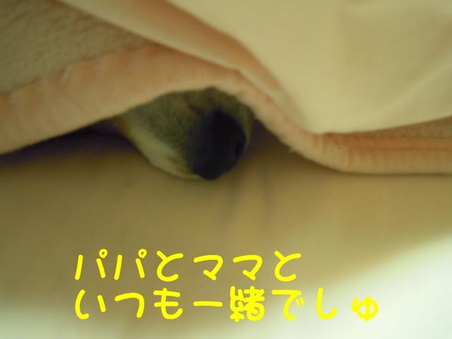 c0166622_10931.jpg