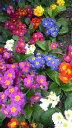 パリでは花粉症は…_a0098948_14435399.jpg