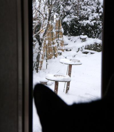 春の雪と餌台 初キジバトなど_a0136293_1749573.jpg