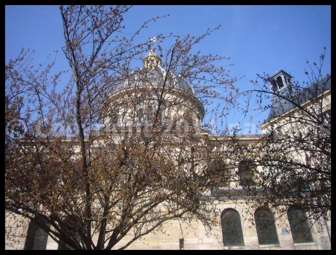 【サクラSAKURA】RUE DE SEINE PARIS_a0008105_19525234.jpg