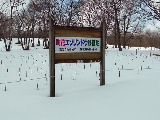 2011年3月26日(土):エゾリンドウ就寝中_e0062415_186912.jpg