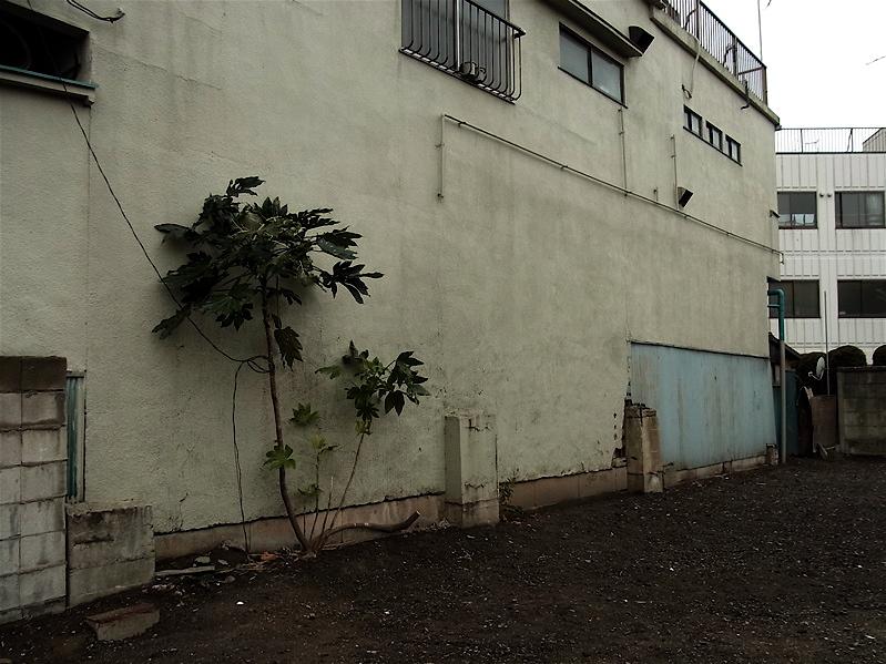 隣りの建物がなくなって_c0156717_1012645.jpg