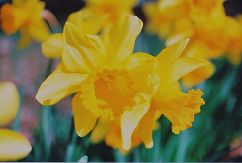 春のよろこび_e0156251_23332714.jpg