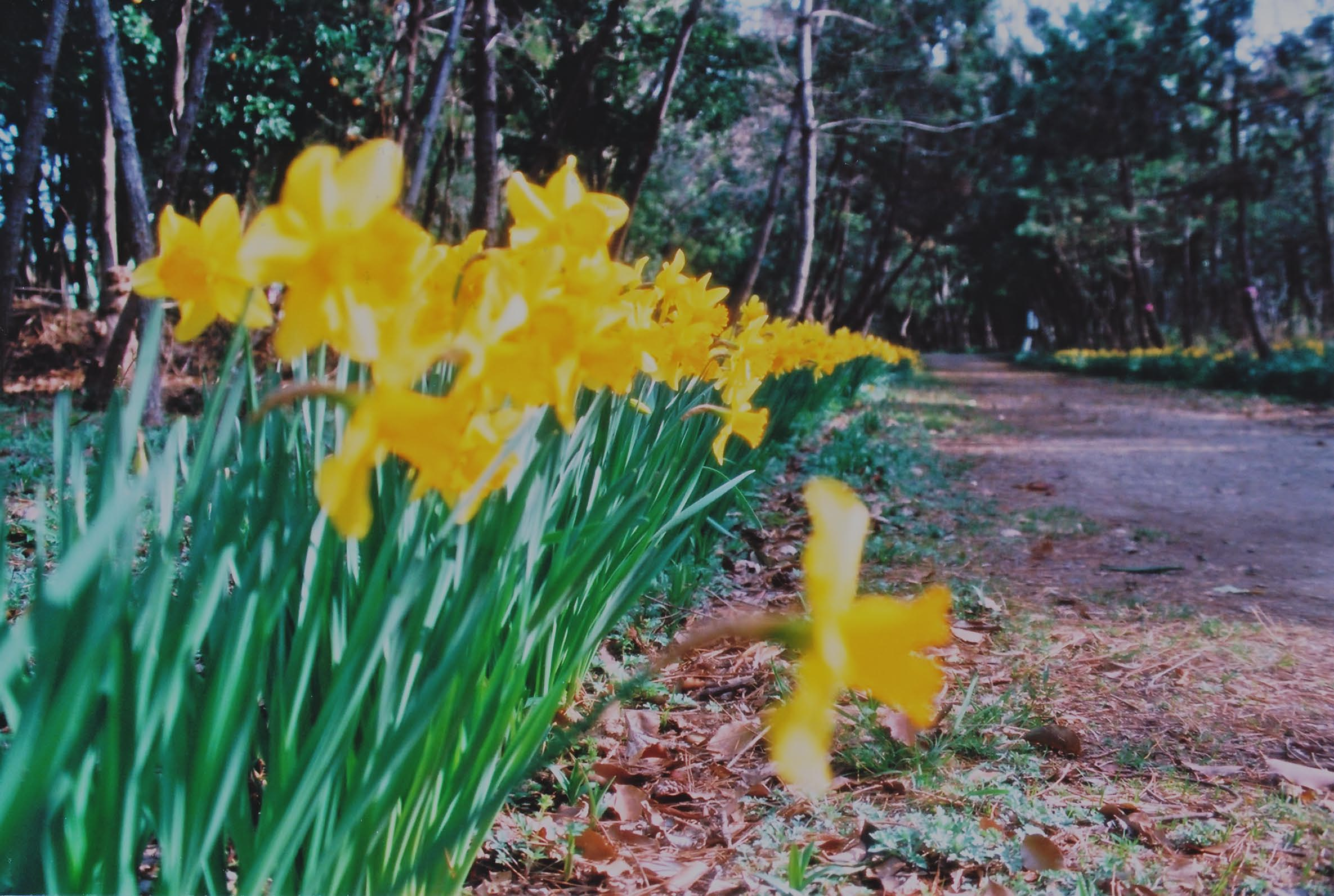 春のよろこび_e0156251_23344069.jpg