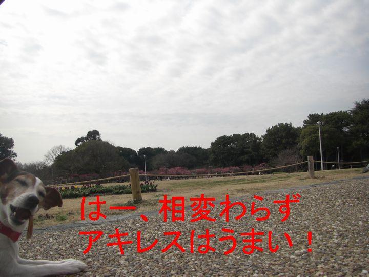 f0053952_151146.jpg