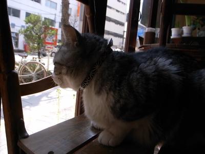 待つ桜_a0180681_16215476.jpg
