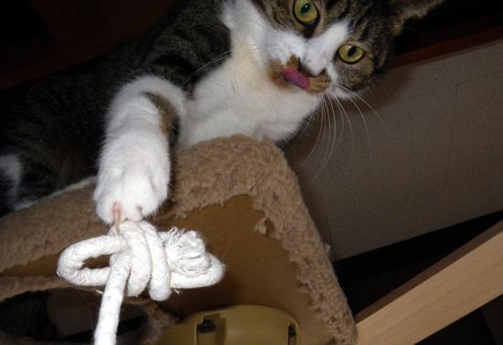猫部屋のニャンコとキャットタワー遊びなど(^^)_a0136293_1624137.jpg