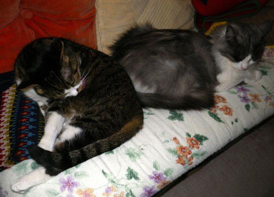 猫部屋のニャンコとキャットタワー遊びなど(^^)_a0136293_16264777.jpg