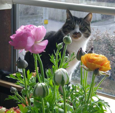 猫部屋のニャンコとキャットタワー遊びなど(^^)_a0136293_16273160.jpg