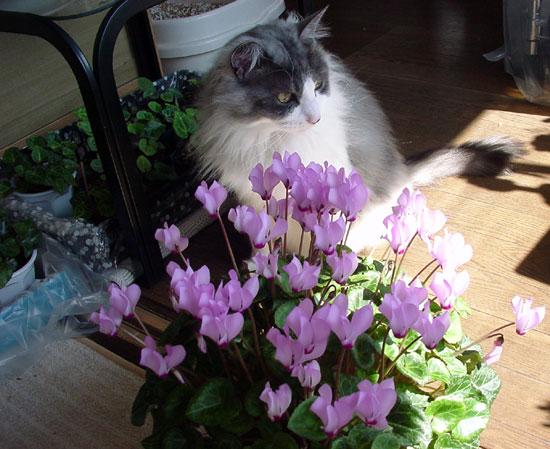 猫部屋のニャンコとキャットタワー遊びなど(^^)_a0136293_16274788.jpg