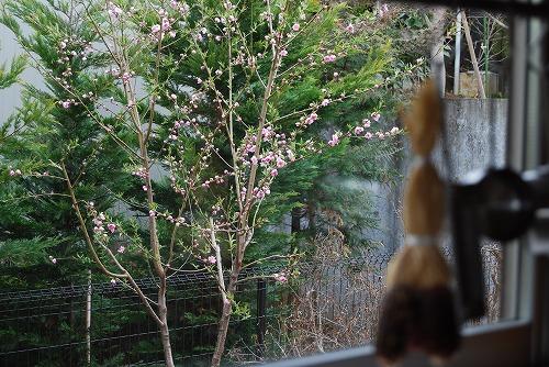花桃(はなもも)2011_c0124100_15335956.jpg