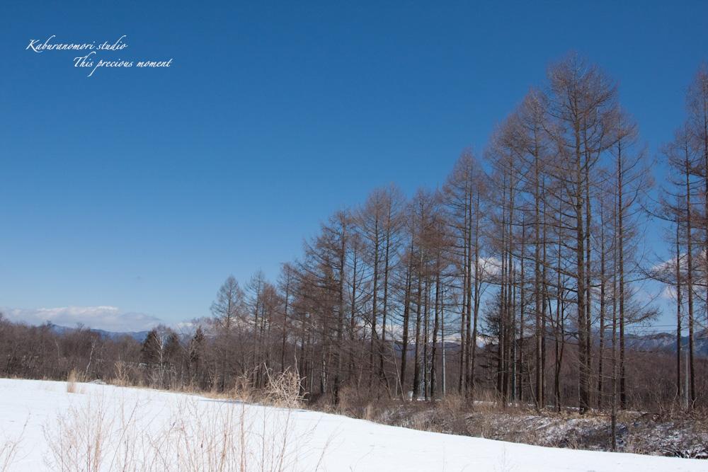 野辺山高原の春は何処_c0137403_18534126.jpg