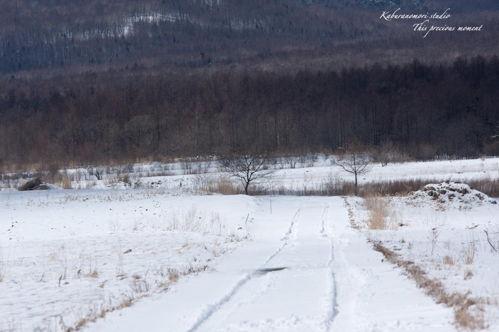 野辺山高原の春は何処_c0137403_18551736.jpg