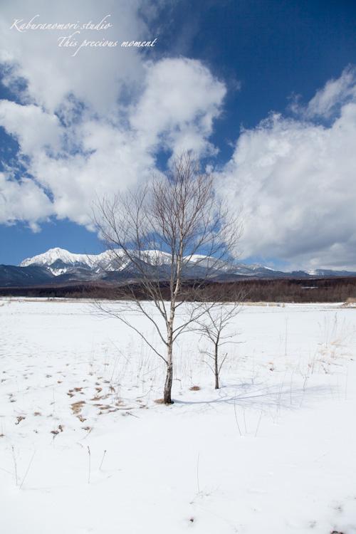 野辺山高原の春は何処_c0137403_18565676.jpg