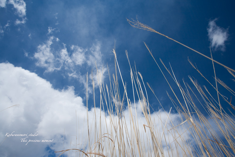 野辺山高原の春は何処_c0137403_19154781.jpg