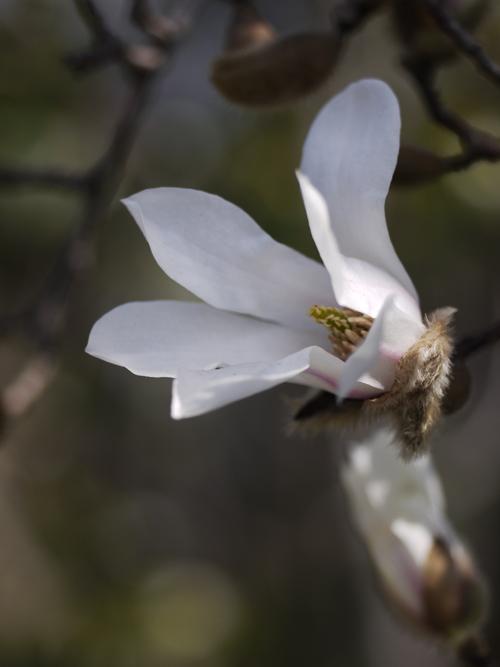 庭の花々 LUMIX DMC GF1 + Micro-NIKKOR55mm 1:2.8_e0203309_14342948.jpg