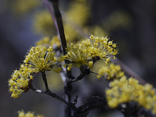 庭の花々 LUMIX DMC GF1 + Micro-NIKKOR55mm 1:2.8_e0203309_1435620.jpg