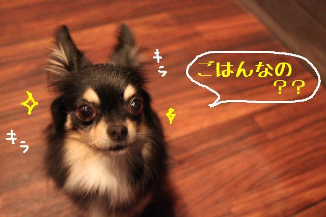 ぽんちゃんの「食」。_b0130018_19433417.jpg