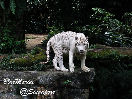 Singapore 現地レポvol.8【画像あり】_f0127319_9292995.jpg