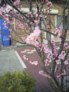 この花のように_e0124021_16181595.jpg