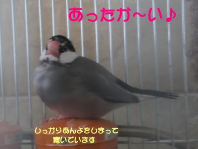 b0158061_2001814.jpg